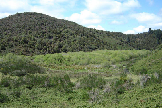 Waikite Wildlife Management Reserve before, in 2012.
