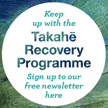 Keep up with the Takahe Recovery Programme - sign up to our free newsletter here.